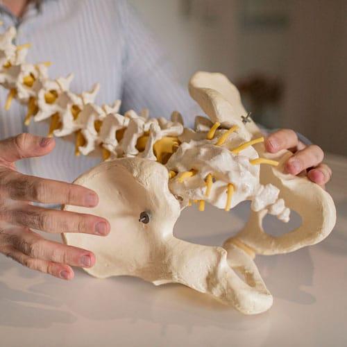 Closeup beenderen bekken en rug